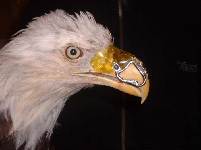 Канадский дантист спас орла