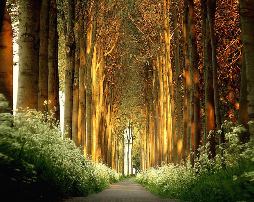 Зелёный тоннель в Нидерландах.
