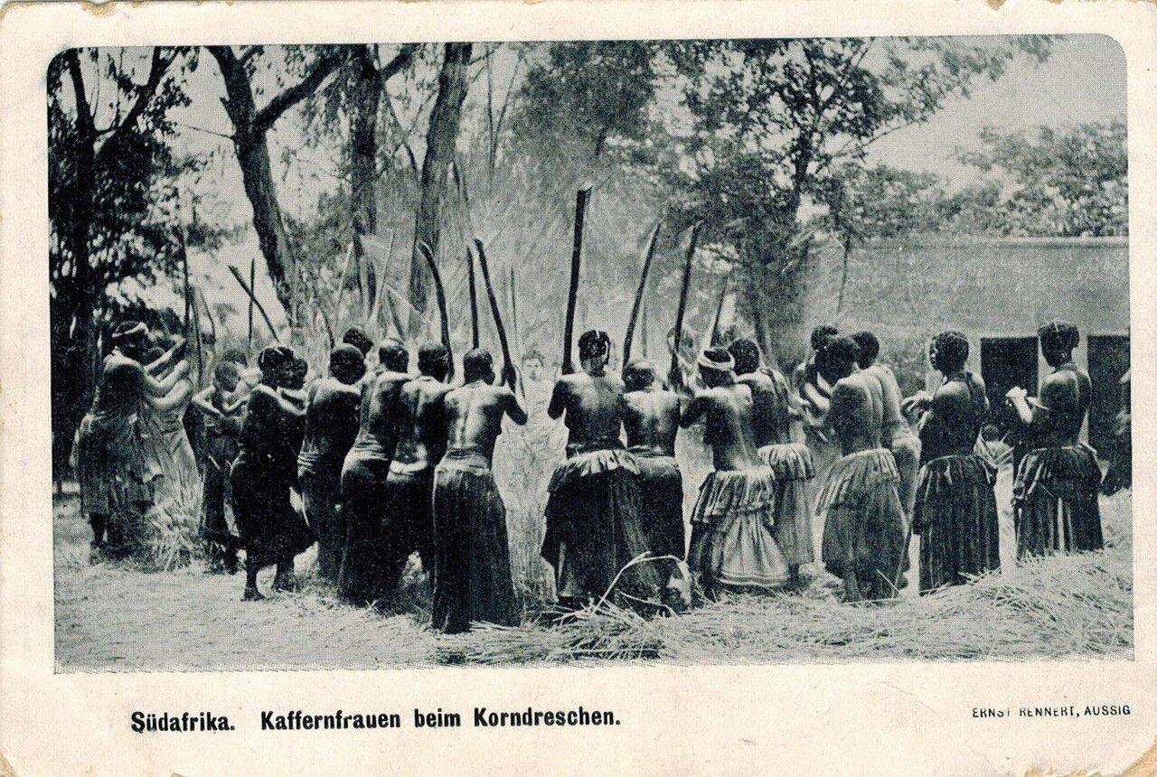 Обработка кукурузы зулусскими женщинами, Южная Африка