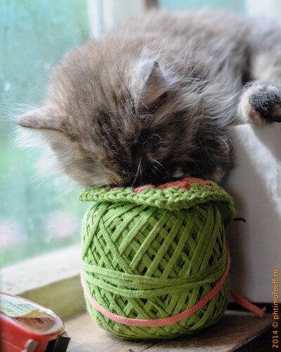 Мимишный котёнок