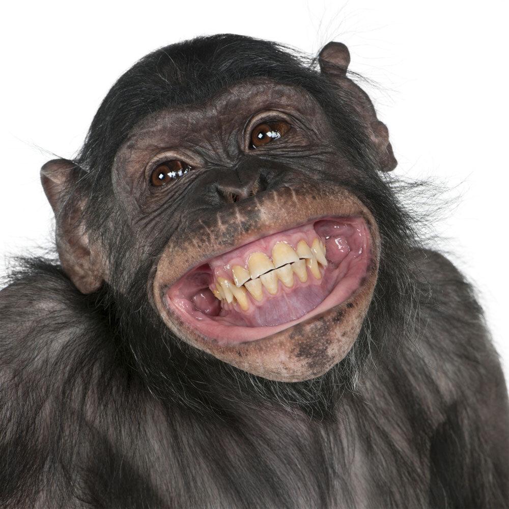 смешная обезьянка картинки
