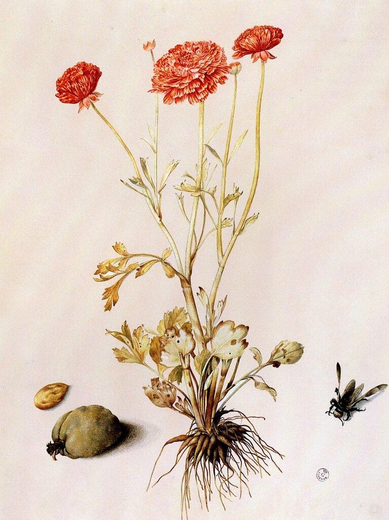 Старинные гербарии картинки, открытки днем