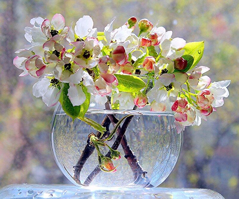 """подарила весна """"акварель""""..."""