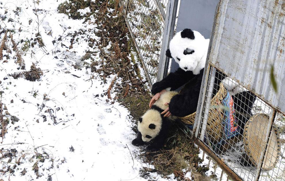 9. Пятимесячный малыш. (Фото China Photos):