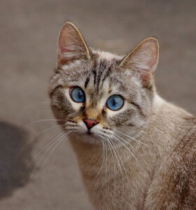 Эти волшебные глаза