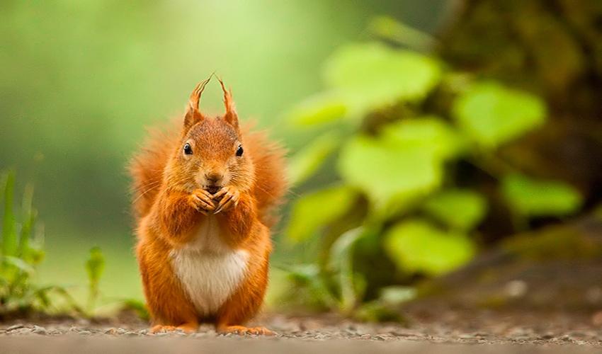 Animal photography by Robert Adamec