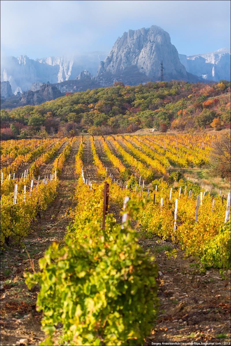 Осень на виноградниках