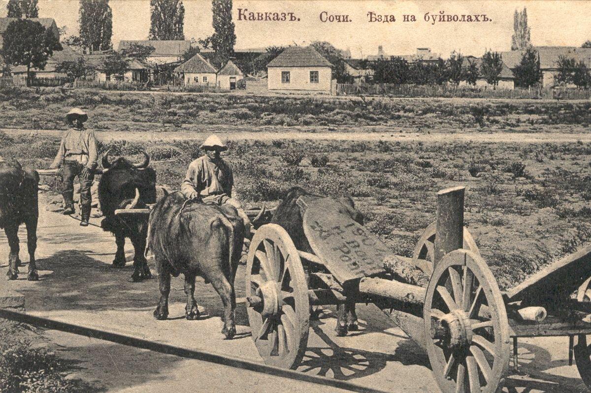 Езда на буйволах