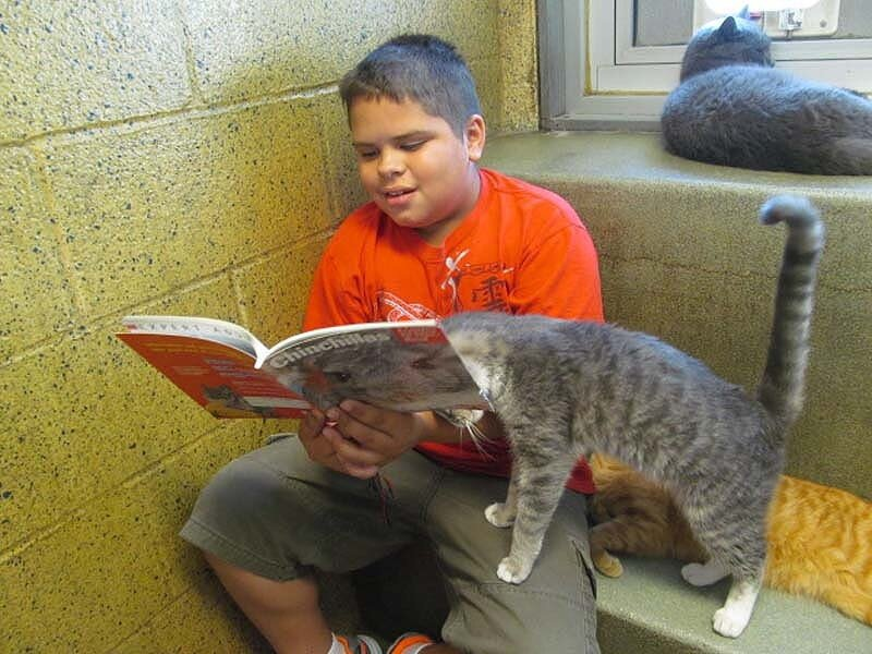 Книжные друзья