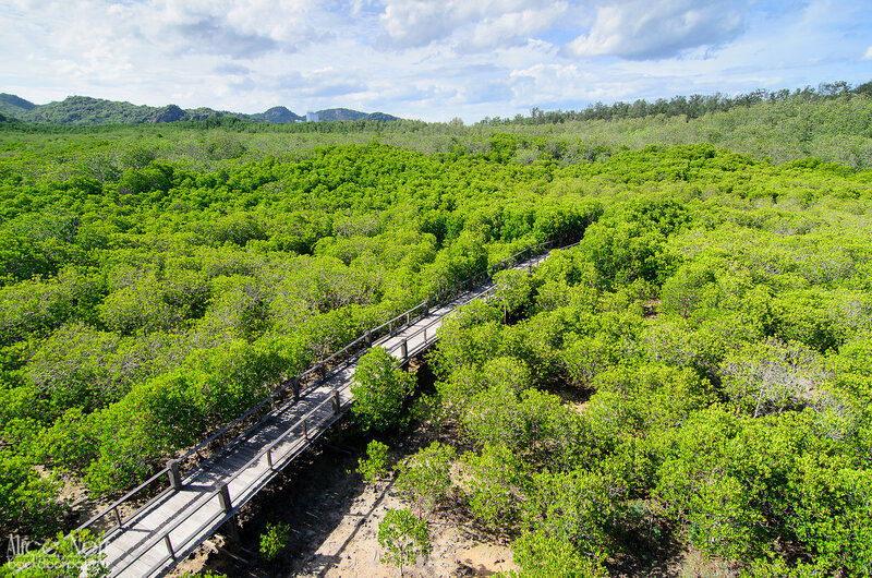 Вид с вышки в Pranburi Forest Park