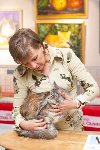 """Международная выставка кошек AFC """"Удивительные лесные кошки"""", 1 марта 2014 г. Сургут 0_b2598_9afe794b_L"""