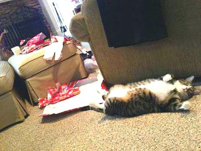 Растерзал все тщательно упакованные подарки ипытается прикинуться мертвым.