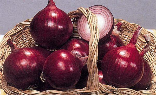 Употребление красного лука может посодействовать вборьбе сраком