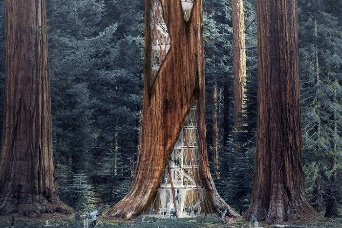 Поближе к природе: концепт домов в гигантских деревьях