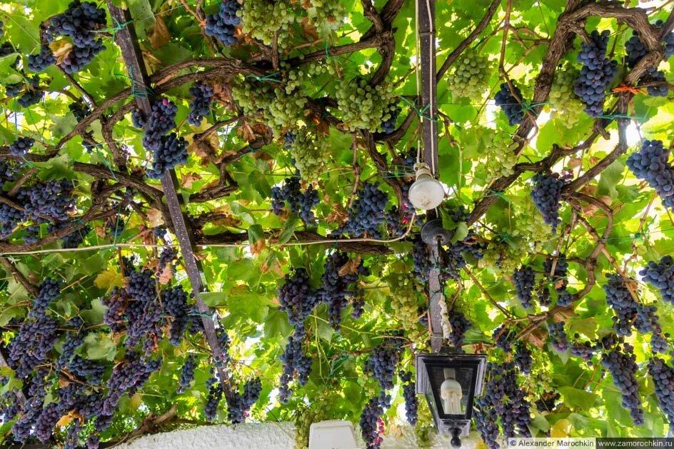 Навес из виноградной лозы во дворе дома. Греция, Корфу.