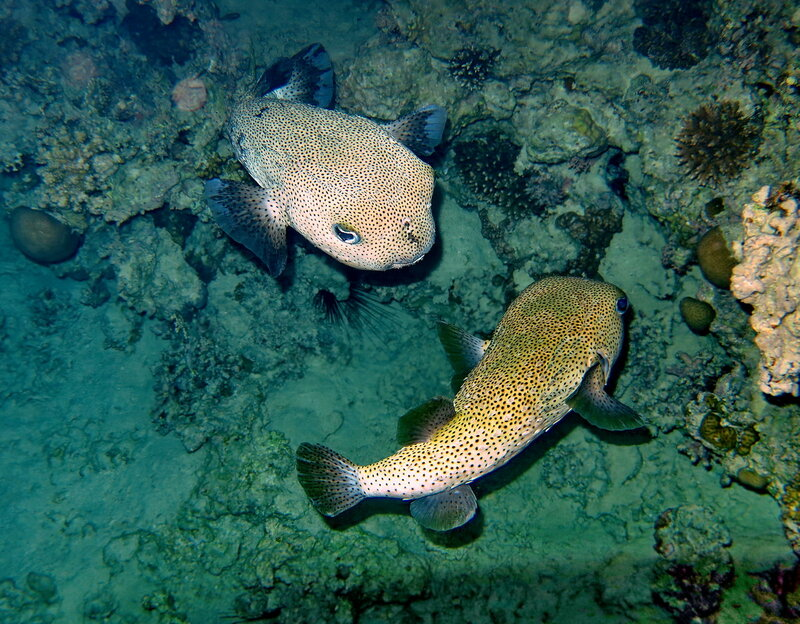 Рыбы - ежи