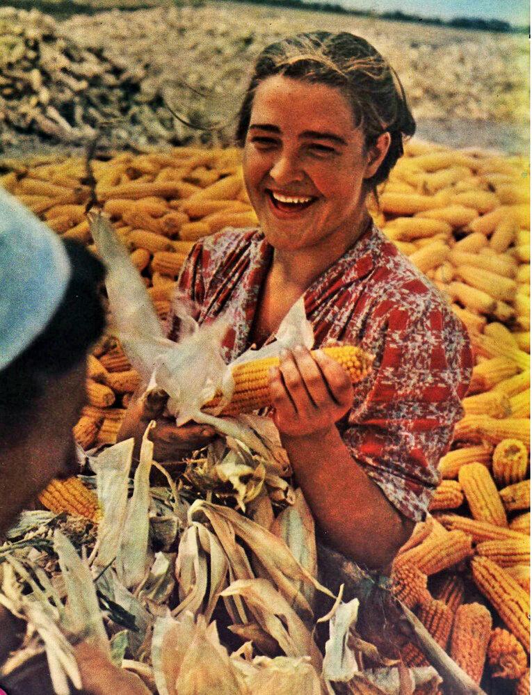 Выращивание кукурузы в ссср 21