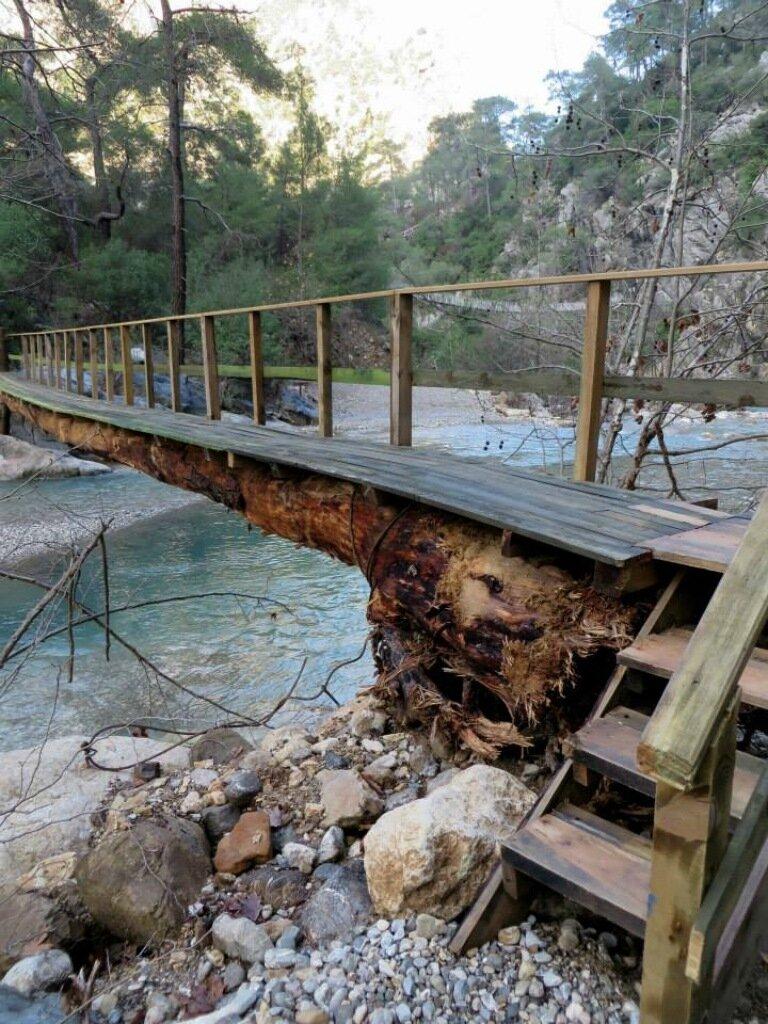 Мост на дереве