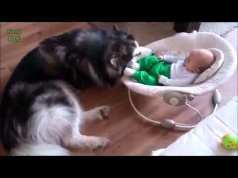 Весёлая подборка кошек, которые защищают детей