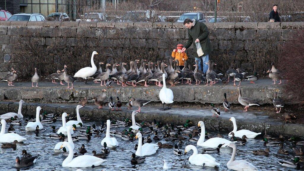 140115_1127_tjorn_kid_birds