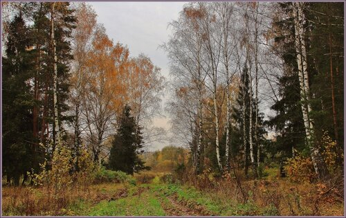 Осень на окраине леса