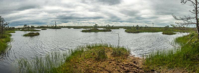 Финальная точка экотропы, но по факту это лишь начало огромного болота.