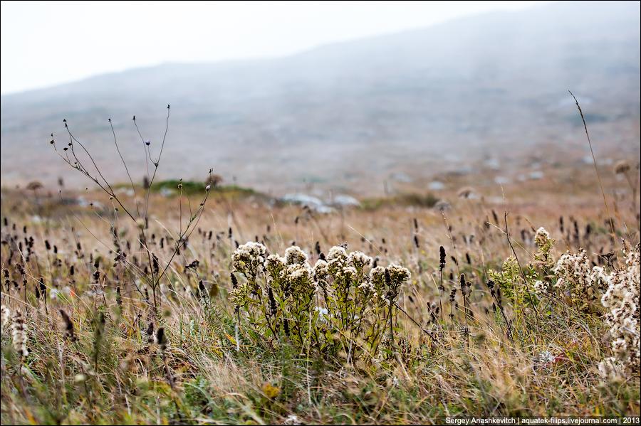 Осенние травы Чатыр-Дага