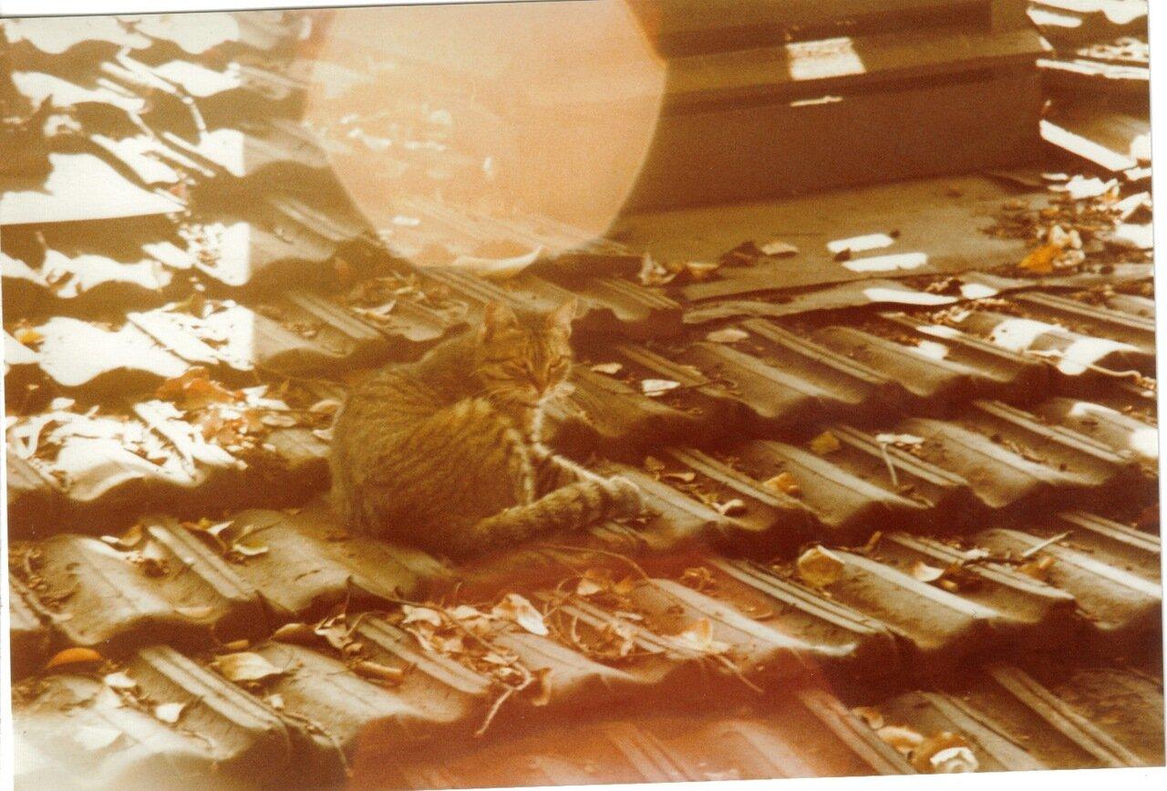 Кошка на крыше ресторана