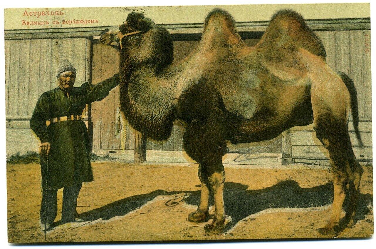 Калмык с верблюдом