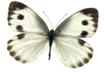 Scrap set Meadow butterflies