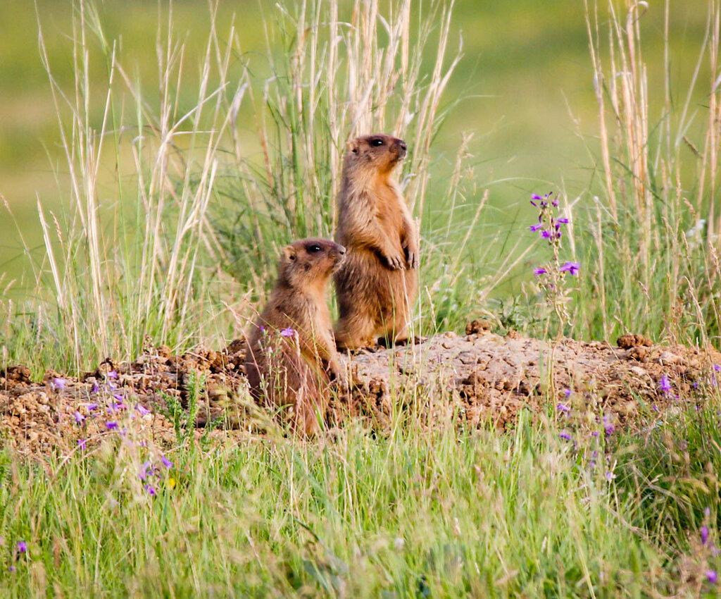 полевые животные ульяновской обл фото что самое