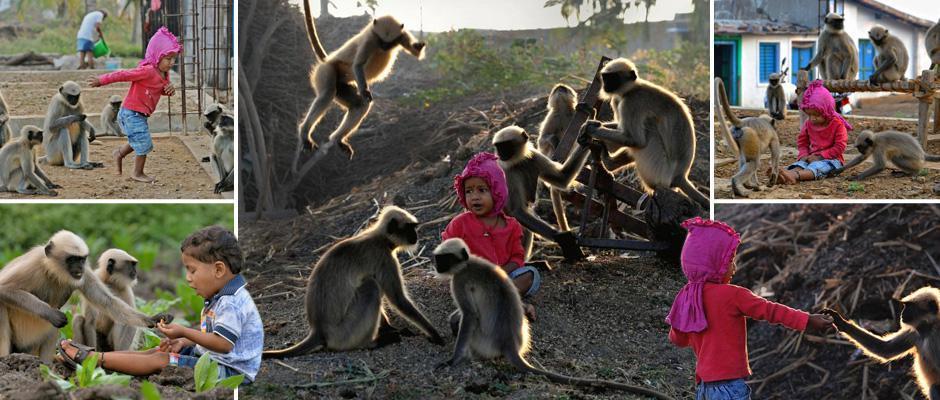 Современный Маугли: двухлетний мальчик дружит со стаей диких обезьян
