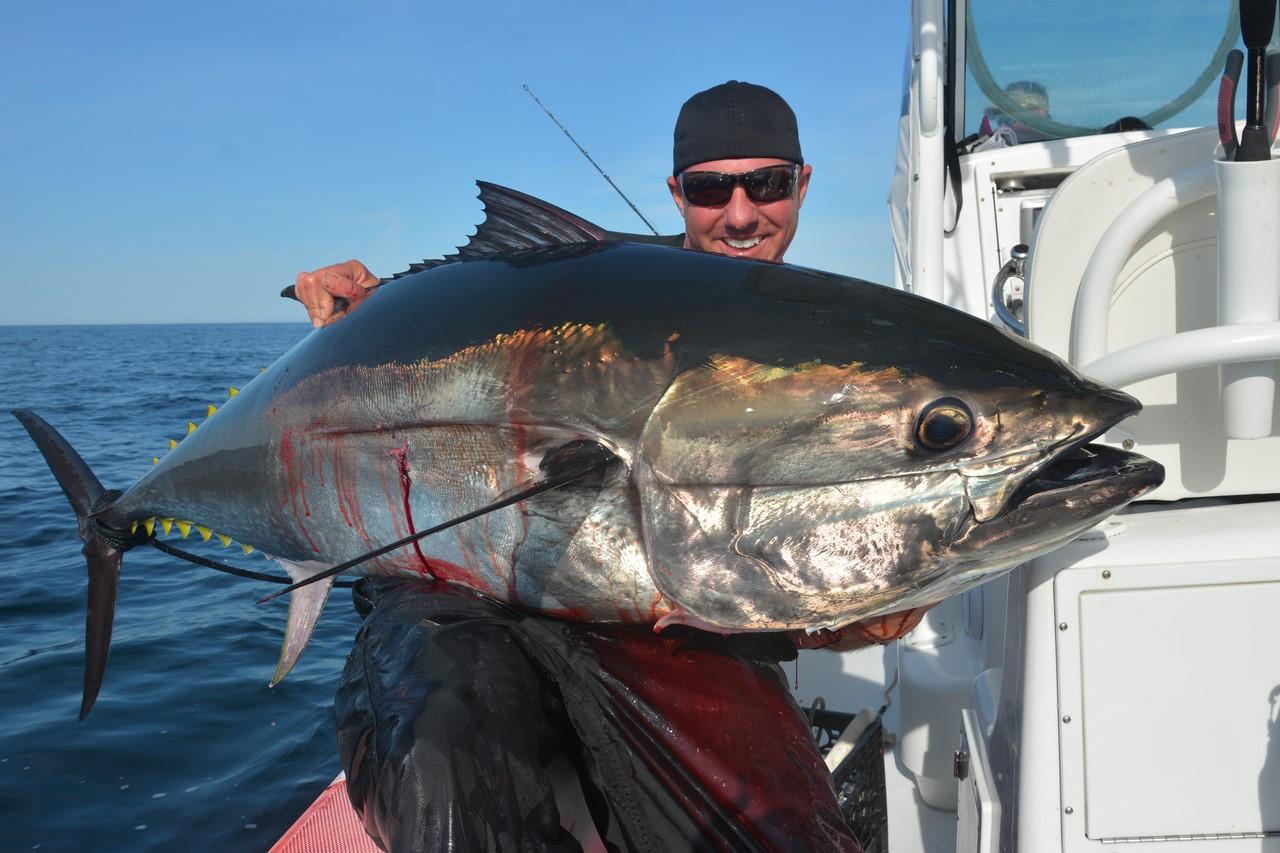 как ловить синего тунца