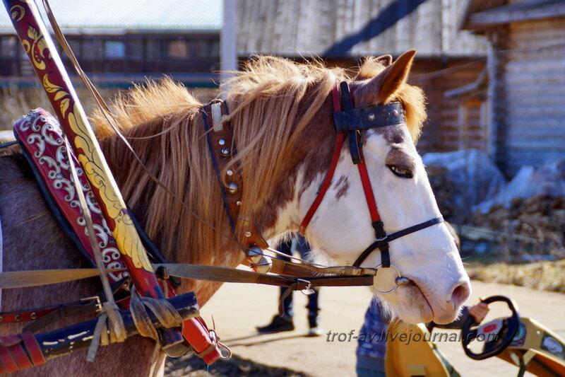 Лошадь с голубыми глазами, Этномир, Калужская обл.
