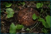 http://img-fotki.yandex.ru/get/9751/15842935.13d/0_d08c2_a5766901_orig.jpg