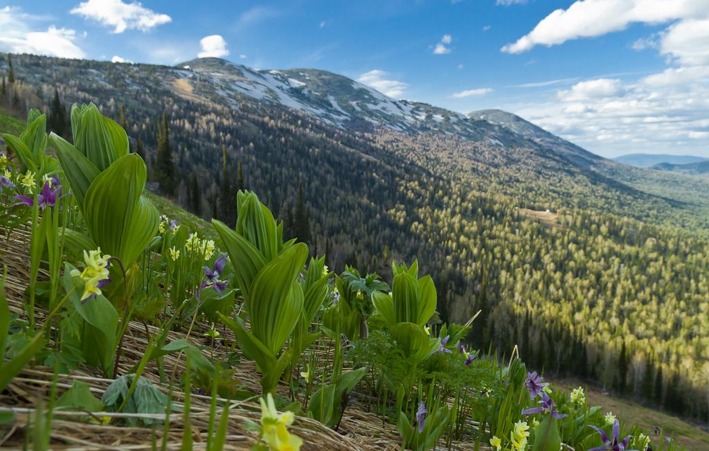 Фотография 16. Весна в горы пришла совсем недавно. Красоты Горной Шории. Стоит ли ехать?