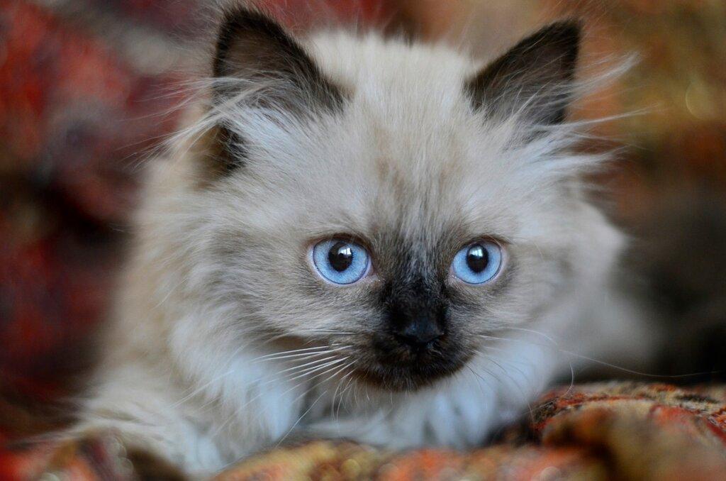 Кошачьи глаза, как два солнца, горят!