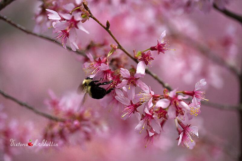 Весна для шмелей_71A6157_Viktoria-Mullin