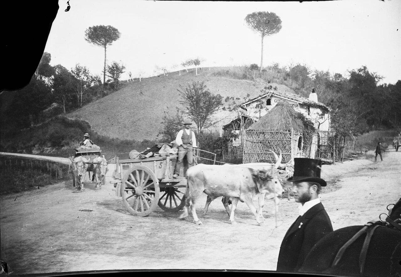 1900. Телега, запряженная волами