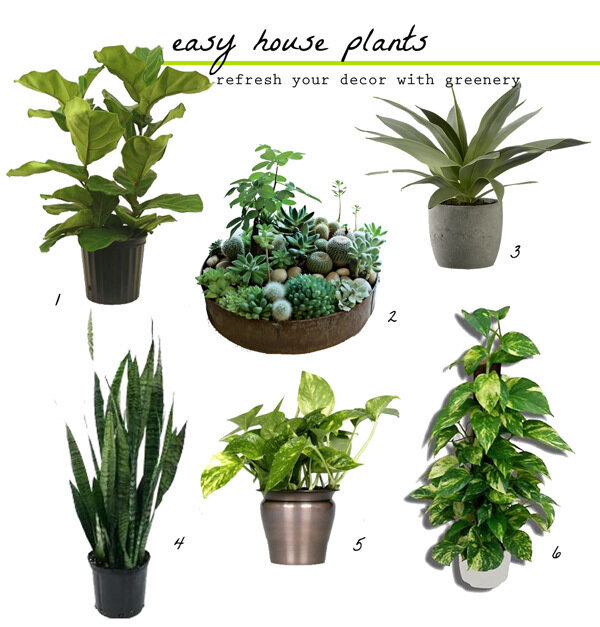 inside plants easy to grow - 600×627