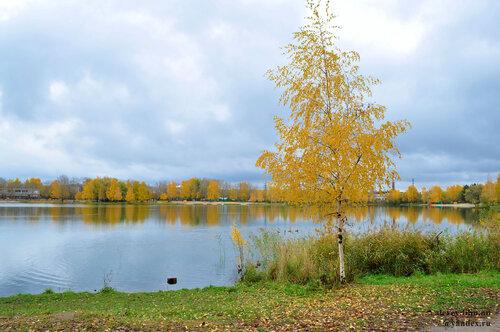 Золотая осень, которой так и не дождались