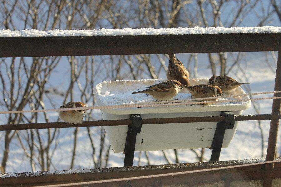 Кормушки для птиц своими руками на балконах 34