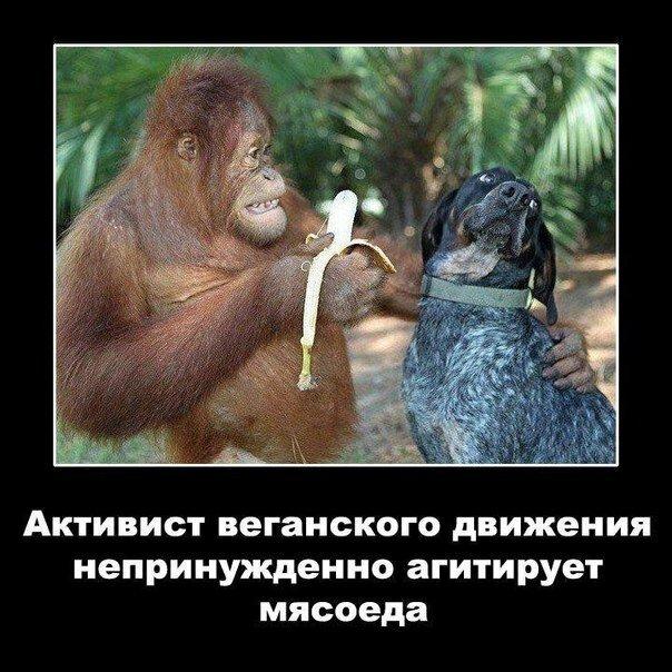 http://img-fotki.yandex.ru/get/9752/51183015.e/0_c0c55_7582ad7c_XL.jpg