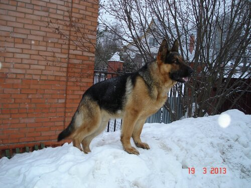http://img-fotki.yandex.ru/get/9752/6162357.18/0_b9966_bb60f74a_L.jpg
