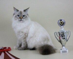Best Junior - 48 Samanta Omili Stars (Female) SIB fs 21 33 Хаванская Е. Ю. Камея, Иркутск