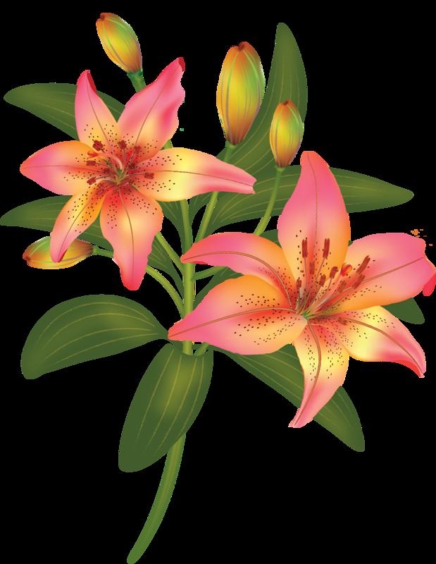 Картинка лилии для детей, дню
