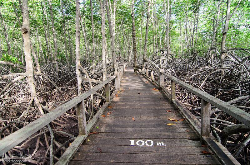 Деревянные настилы через мангровый лес в Pranburi Forest Park
