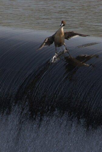 кадр природа животные