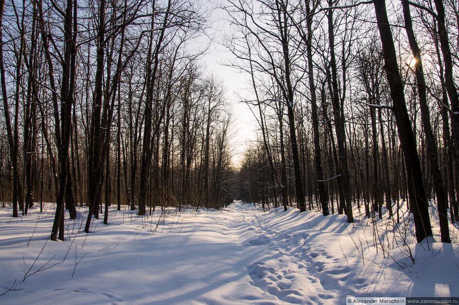 Зимний парк (пейзаж)