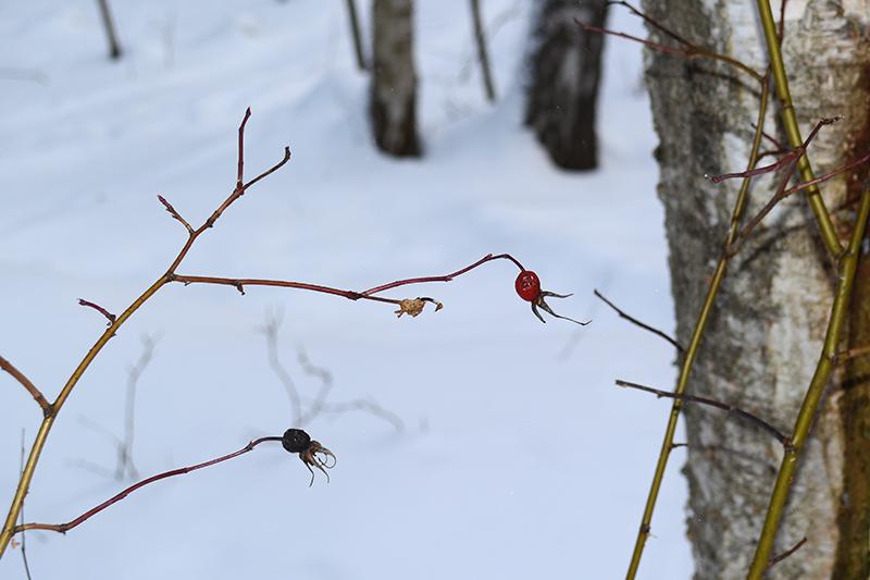 зимний лес 13